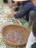 Captura de pesca de Vietnam Asia del océano del mar de los pescados Fotografía de archivo