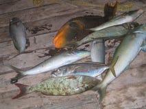 Captura de pescados del océano en la cubierta de barco fotografía de archivo