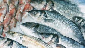 Captura de pescados frescos en el hielo Tiro panor?mico Cierre para arriba almacen de metraje de vídeo