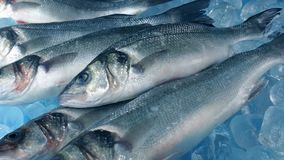 Captura de pescados frescos en tiro móvil del hielo almacen de video