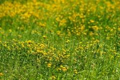 Captura de un campo de flor hermoso fotografía de archivo