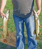 Captura do sucesso do pescador do pique dos peixes dos pares da posse da mão Fotos de Stock