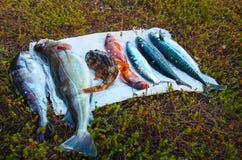 A captura na PESCA do mar de Barents, bacalhau, bacalhau do açafrão, badejo, góbio do mar, arenque, cavala fotos de stock royalty free