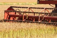 Capturador del arroz Imagenes de archivo