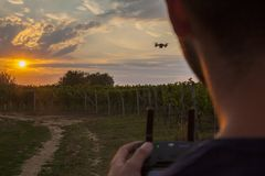 Man flies a small drone in a vineyard at sun dawn in the later e royalty free stock photography