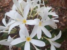 Capture de fleur Photographie stock