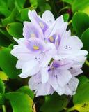 Capture de fleur Photos stock