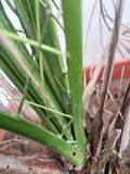 My luck stock image