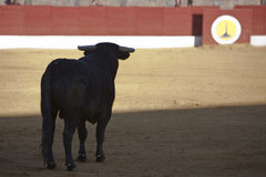 Capture of the silhouette of a brave bull in a bullfight Stock Image