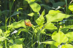 Butterfly within the Green Stock Images