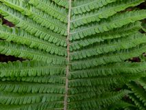 Leaf of fern in close up view royalty free stock photos