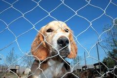 Captured dog Royalty Free Stock Images