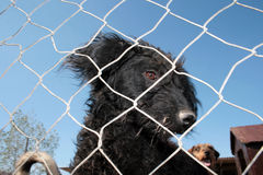 Captured Dog Stock Photo