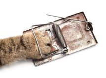 Captured hunter. Cat paw in the mousetrap on a white background Royalty Free Stock Images