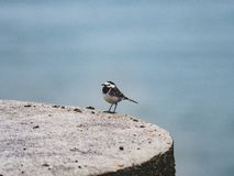 Captured a sparrow sitting on a plateau in front of a sea stock photos