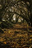 Trees tunnel during the autumn / Forest tunnel with vibrant colors royalty free stock images