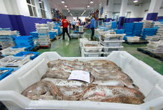 Daily captures on fish market. Workers range and check correct weight on different species of fish to be sold on its boxes inside a fish market in the Spanish Stock Photo