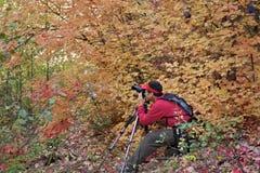 Capturing Beautiful Fall Foliage Royalty Free Stock Photos
