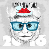 Capuchin monkey Hipster with blue glasses and Christmas hat. Stock Image