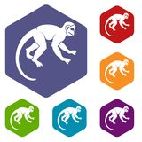 Capuchin monkey icons set hexagon Stock Image