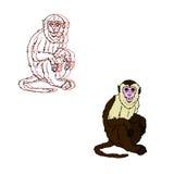 Capuchin monkey on a white background Royalty Free Stock Images