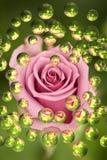 Capullo de rosa Fotos de archivo libres de regalías