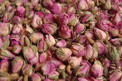 Capullos de rosa Fotografía de archivo libre de regalías