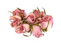 Capullos de rosa muertos Fotografía de archivo libre de regalías