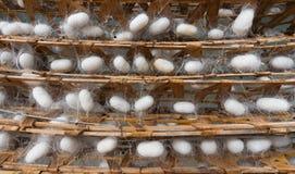 Capullos de seda en los estantes de bambú Fotos de archivo