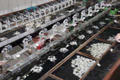 Capullos del gusano de seda, fábrica de seda, Suzhou China Imágenes de archivo libres de regalías