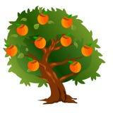 Caqui del árbol con las frutas y las hojas del verde ilustración del vector