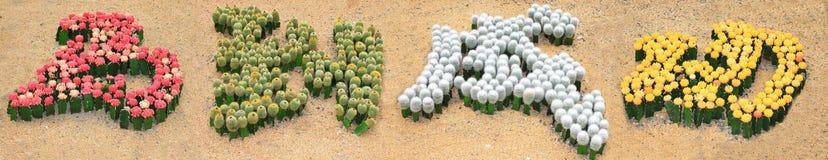 Carácter chino con el cactus Imágenes de archivo libres de regalías