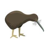 Carácter lindo animal del apteryx del vector del pájaro del mantelli de la fauna de la naturaleza del kiwi de la historieta del v ilustración del vector