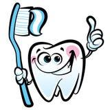 Carácter molar del diente de la historieta feliz que sostiene los wi dentales del cepillo de dientes Imágenes de archivo libres de regalías