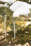 Carámbano Spruce Fotografía de archivo