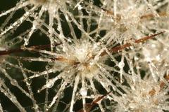 Carámbanos de cristal con gotas del agua Imágenes de archivo libres de regalías
