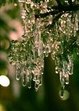 Carámbanos del árbol de abeto Foto de archivo libre de regalías