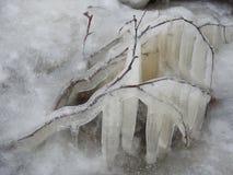 Carámbanos del hielo en la rama de árbol, Lituania Fotos de archivo libres de regalías