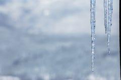 Carámbanos fríos del hielo claro Imagen de archivo libre de regalías