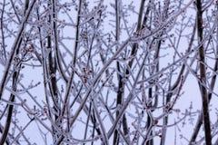 Carámbanos a partir de la primera tormenta del invierno Fotos de archivo libres de regalías