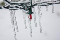Carámbanos que cuelgan de luces de la Navidad Imagenes de archivo