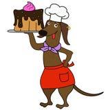 Caráter do cozinheiro chefe do cão do bassê dos desenhos animados Fotos de Stock
