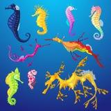 Caráter dos peixes do mar do vetor do cavalo marinho ou mar-cavalo dos desenhos animados sob o mar no grupo tropical da ilustraçã ilustração stock