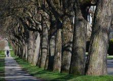Caráter na árvore-avenida fotografia de stock royalty free