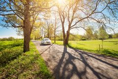 Car on asphalt road in spring. Car on asphalt road on spring day at park. Transport in alley at springtime in beautiful sunny weather Royalty Free Stock Image