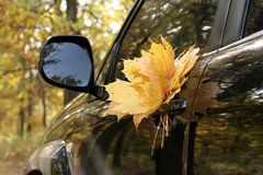 Car in autumn forest Royalty Free Stock Photos