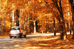 Car in the autumn forest orange Royalty Free Stock Image