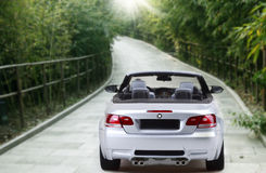 Car in the bamboo grove . BMW sport car traveling in the bamboo grove stock photography