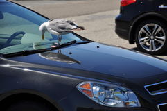 Car and the bird Stock Photo