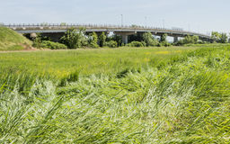 Car brigde and grass Royalty Free Stock Photo